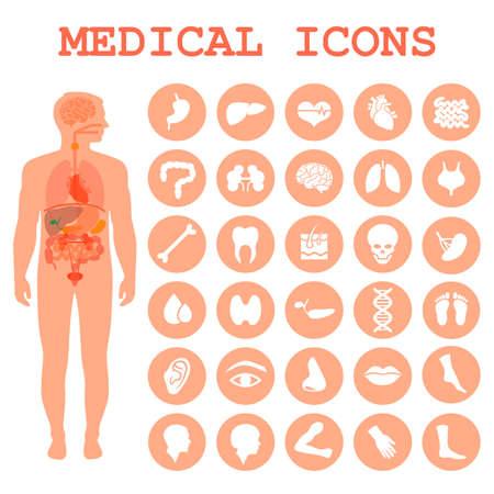 Illustrazione per medical infographic icons, human organs, body anatomy - Immagini Royalty Free