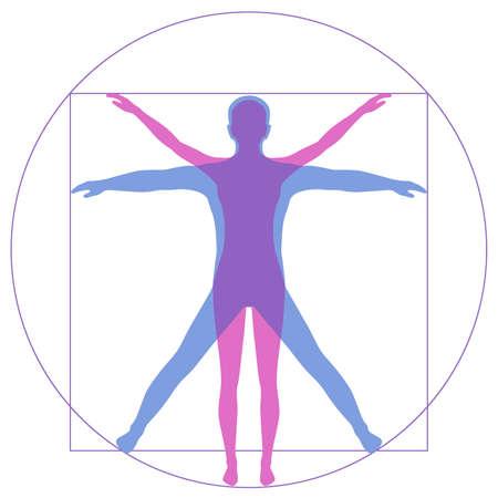 Ilustración de Leonardo Da Vinci Vetruvian Man, human anatomy - Imagen libre de derechos