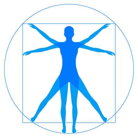 Illustrazione per Leonardo Da Vinci Vetruvian Man, human anatomy - Immagini Royalty Free