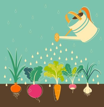 Illustration pour Garden watering concept with root veggies - image libre de droit