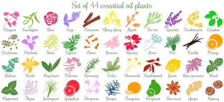 Illustration pour Big set of 44 essential oil plants. flat style, colored - image libre de droit