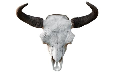 Photo pour Close-up of a white cow skull with horns on a white isolated background, pitchfork on top - image libre de droit