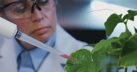Foto de Close-up of a female scientist dropping liquid onto green leaves with a pipette - Imagen libre de derechos