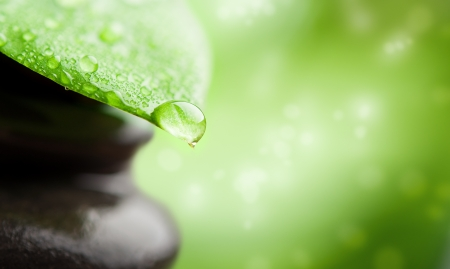 Photo for green abstract background  spa with leaf and water drop - Royalty Free Image