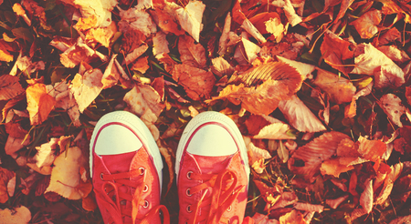 Photo pour Shoes red shoes in the autumn leaves - image libre de droit