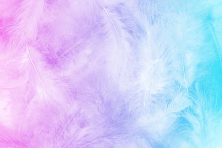 Foto de Close up photo of fluffy feathers pile. Sweet pastel colorful background with pink to blue gradient. Light, serenity, purity, clarity. - Imagen libre de derechos