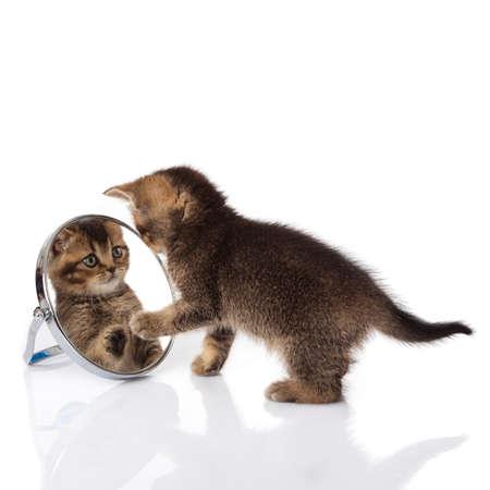 kitten with mirror on white background  kitten looks in a mirror