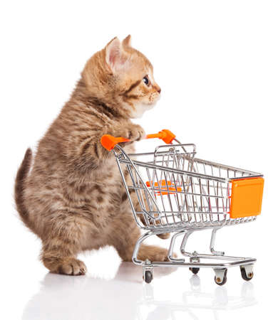 Photo for british cat with shopping cart isolated on white. kitten osolated - Royalty Free Image