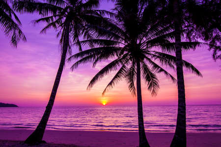 Photo pour Palm trees silhouette at sunset - image libre de droit