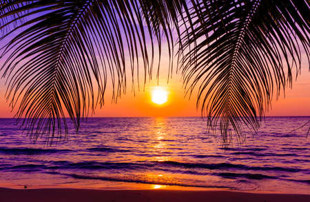 Photo pour Beautiful sunset.  Sunset over the ocean with tropical palm trees.  Paradise beach - image libre de droit