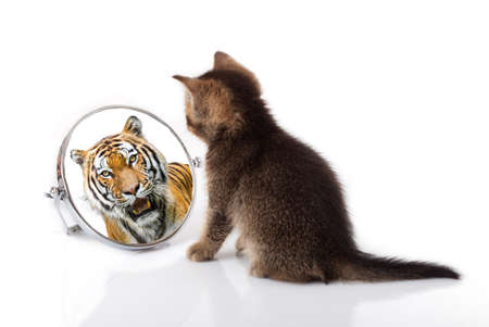 Foto de kitten with mirror on white background. kitten looks in a mirror reflection of a tiger - Imagen libre de derechos