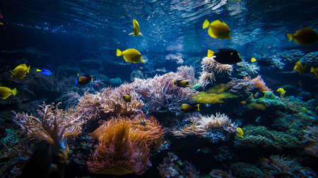 Photo for Underwater coral reef landscape  with colorful fish - Royalty Free Image