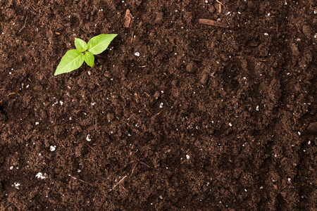 Foto de Seedling green plant surface top view textured background - Imagen libre de derechos