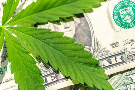 Photo pour cannabis leaf and money - image libre de droit