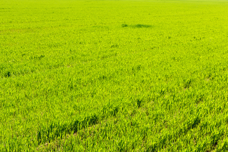 Photo pour beautiful Green field - image libre de droit