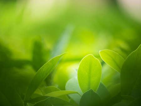 Photo pour nature backgrounds, backgrounds concept. - image libre de droit