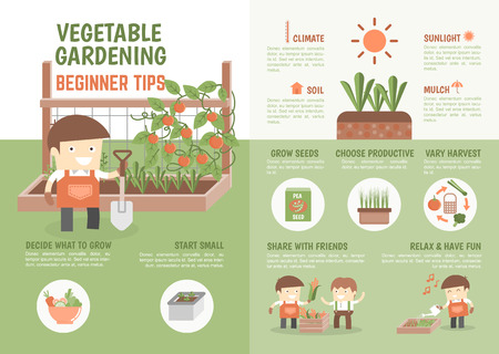 Illustration for infographic for kids about how to grow vegetable beginner tips - Royalty Free Image