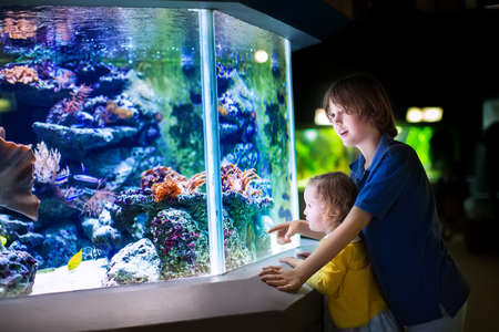 Foto de Happy laughing boy and his adorable toddler sister, cute little curly girl watching fishes in a tropical aquarium with coral reef wild life having fun together on a day trip to a modern city zoo - Imagen libre de derechos
