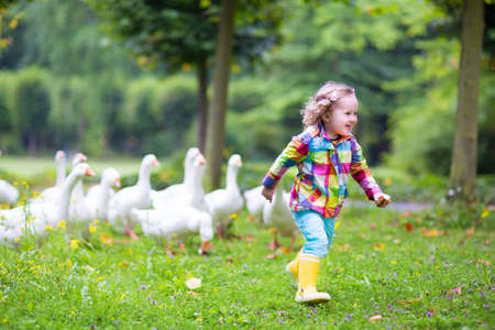 Photo pour Funny happy little girl, adorable curly toddler wearing a colorful rain jacket, running in a park playing and feeding white geese birds on a warm autumn day in a city forest - image libre de droit