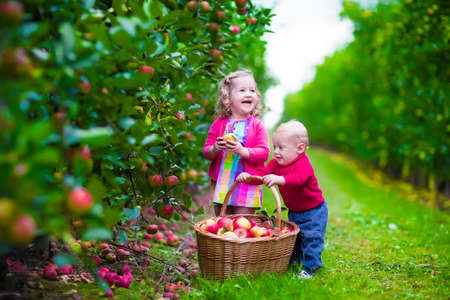 Foto de Child picking apples on a farm in autumn. Little girl and boy play in apple tree orchard. Kids pick fruit in a basket. Toddler and baby eat fruits at fall harvest. Outdoor fun for children. - Imagen libre de derechos