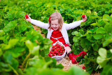 Foto de Child picking strawberries. Kids pick fresh fruit on organic strawberry farm. Children gardening and harvesting. Toddler kid eating ripe healthy berry. Outdoor family summer fun in the country. - Imagen libre de derechos
