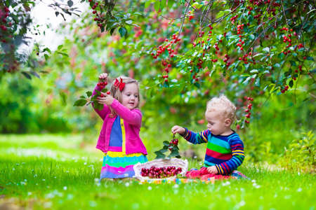 Photo for Kids picking cherry on a fruit farm. Children pick cherries in summer orchard. Toddler kid and baby eat fresh fruit from garden tree. Girl and boy eating berry in a basket. Harvest time fun for family - Royalty Free Image