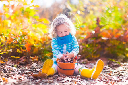 Photo pour Girl holding acorn and colorful leaf in autumn park. Child picking acorns in a bucket in fall forest with golden oak and maple leaves. Children play outdoors. Kids playing and hiking in the woods. - image libre de droit