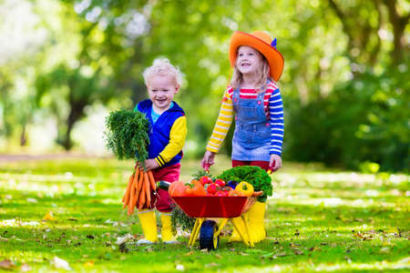 Foto de Two children picking fresh vegetables on organic bio farm. Kids gardening and farming. Autumn harvest fun for family. Toddler kid and preschooler play outdoors. Healthy nutrition for child and baby. - Imagen libre de derechos