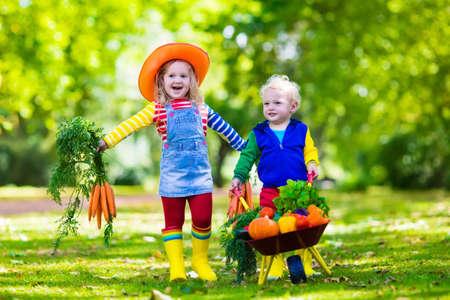 Photo pour Two children picking fresh vegetables on organic bio farm. Kids gardening and farming. Autumn harvest fun for family. Toddler kid and preschooler play outdoors. Healthy nutrition for child and baby. - image libre de droit