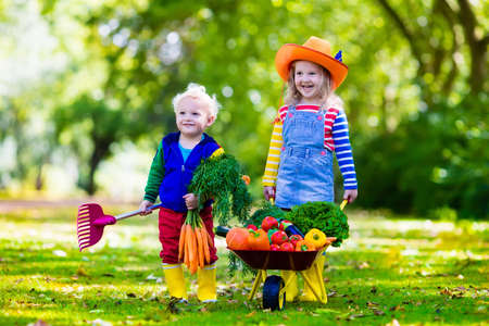 Foto für Two children picking fresh vegetables on organic bio farm. Kids gardening and farming. Autumn harvest fun for family. Toddler kid and preschooler play outdoors. Healthy nutrition for child and baby. - Lizenzfreies Bild