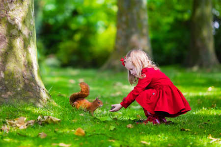 Photo pour Girl feeding squirrel in autumn park. Little girl in red trench coat and rain boots watching wild animal in fall forest with golden oak and maple leaves. Children play outdoors. Kids playing with pets - image libre de droit
