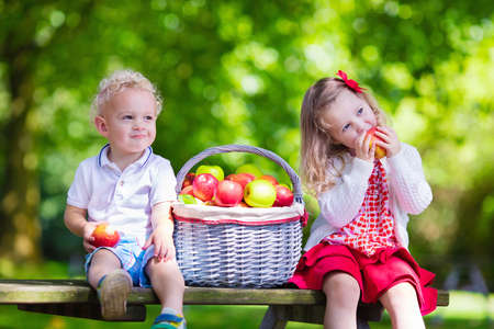 Photo pour Child picking apples on a farm in autumn. Little girl and boy playing in apple tree orchard. Kids pick fruit in a basket. Toddler eating fruits at harvest. Outdoor fun for children. Healthy nutrition. - image libre de droit