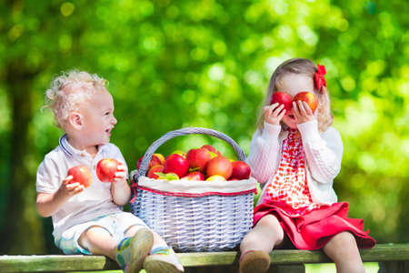 Foto per Child picking apples on a farm in autumn. Little girl and boy playing in apple tree orchard. Kids pick fruit in a basket. Toddler eating fruits at harvest. Outdoor fun for children. Healthy nutrition. - Immagine Royalty Free