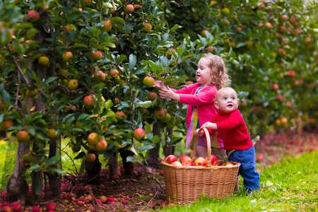 Foto de Adorable little girl and baby boy picking fresh ripe apples in fruit orchard. Children pick fruits from apple tree in a basket. Family fun during harvest time on a farm. Kids playing in autumn garden - Imagen libre de derechos
