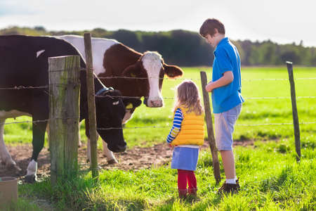 Foto de Happy kids feeding cows on a farm. Little girl and school age boy feed cow on a country field in summer. Farmer children play with animals. Child and animal friendship. Family fun in the countryside. - Imagen libre de derechos