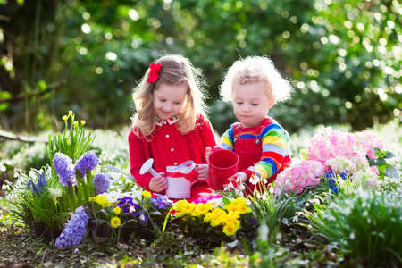 Photo pour Children planting spring flowers in sunny garden. Little boy and girl gardener plant hyacinth, daffodil, snowdrop in flower bed. Gardening tools and water can for kids. Family working in the backyard. - image libre de droit