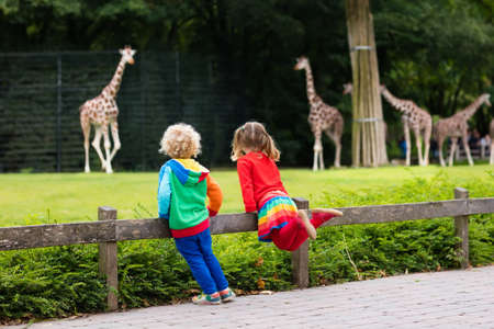 Photo pour Two children, little toddler boy and preschool girl, brother and sister, watching giraffe animals at the zoo on sunny summer day. Wildlife experience for kids at animal safari park. - image libre de droit
