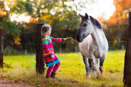 Photo pour Little girl feeding a horse. Kid playing with pet horses. Child feeding animal on a ranch on cold fall day. Family on a farm in autumn. Outdoor fun for children. - image libre de droit