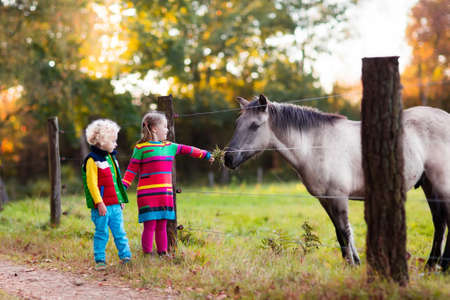 Foto de Family on a farm in autumn. Kids feed a horse. Outdoor fun children. Toddler boy and girl playing with pets. Child feeding animal on a ranch on cold fall day. - Imagen libre de derechos