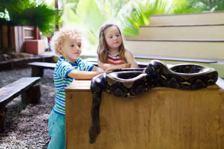 Photo pour Boy and girl hold and feed huge python snake at day trip to zoo. Preschooler kid watching wild animals in terrarium. Little child holding snakes. Wildlife safari park for children. Kids with reptiles. - image libre de droit