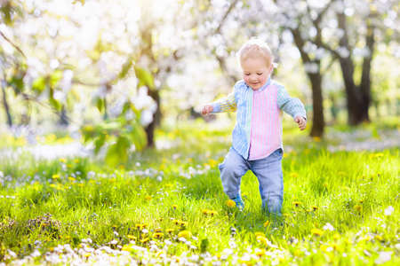 Photo pour Little boy playing in blooming cherry blossom garden. Child with spring flowers in fruit orchard. Easter egg hunt in beautiful apple tree farm. Cherry flower celebration with kids. - image libre de droit