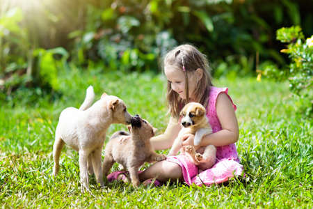 Photo pour Kids play with cute little puppy. Children and baby dogs playing in sunny summer garden. Little girl holding puppies. Child with pet dog. Family and pets on park lawn. Kid and animals friendship. - image libre de droit