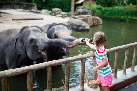 Foto de Family feeding elephant in zoo. Children feed Asian elephants in tropical safari park during summer vacation in Singapore. Kids watch animals. Little girl giving fruit to wild animal. - Imagen libre de derechos