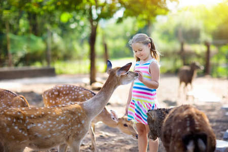 Photo pour Child feeding wild deer at petting zoo. Kids feed animals at outdoor safari park. Little girl watching reindeer on a farm. Kid and pet animal. Family summer trip to zoological garden. Herd of deers. - image libre de droit
