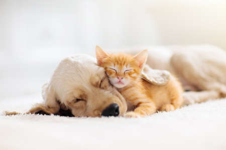 Photo for Cat and dog sleeping together. Kitten and puppy taking nap. Home pets. Animal care. Love and friendship. Domestic animals. - Royalty Free Image