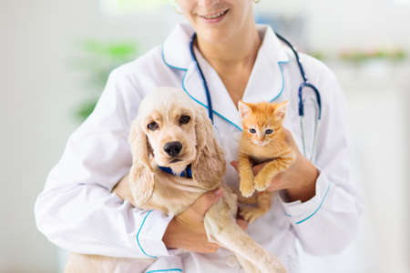 Foto de Vet examining dog and cat. Puppy and kitten at veterinarian doctor. Animal clinic. Pet check up and vaccination. Health care for dogs and cats. - Imagen libre de derechos