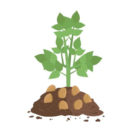 Illustration pour Potato Plant with Soil - image libre de droit