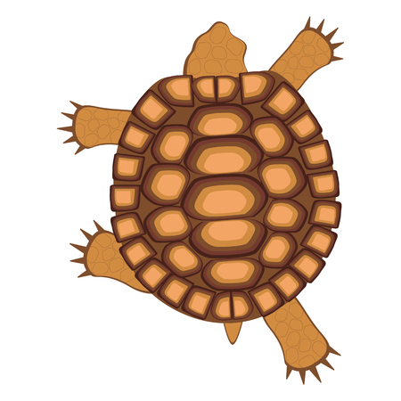Illustration pour Reptile turtle. Land tortoise. View from above. Walking, running. Bright vector illustration isolated against white background - image libre de droit