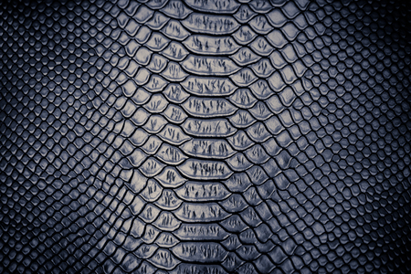 Photo for close up of snake skin texture use for background - Royalty Free Image
