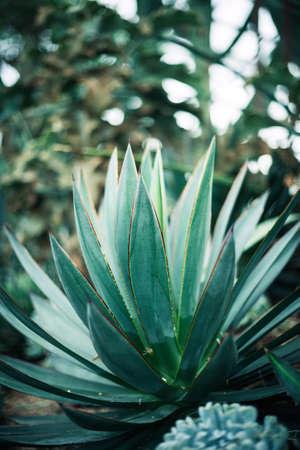 Foto de Rustic macro shot of cactus - tropical plant with shallow depth of field.Natural background with succulent. - Imagen libre de derechos